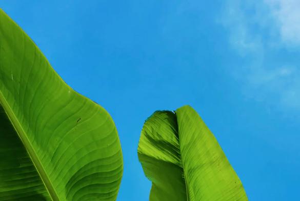 green plants depicting ethics